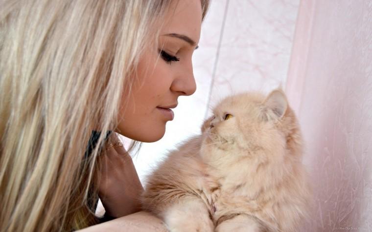 девушка котенок лицо взгляд  № 3597655  скачать