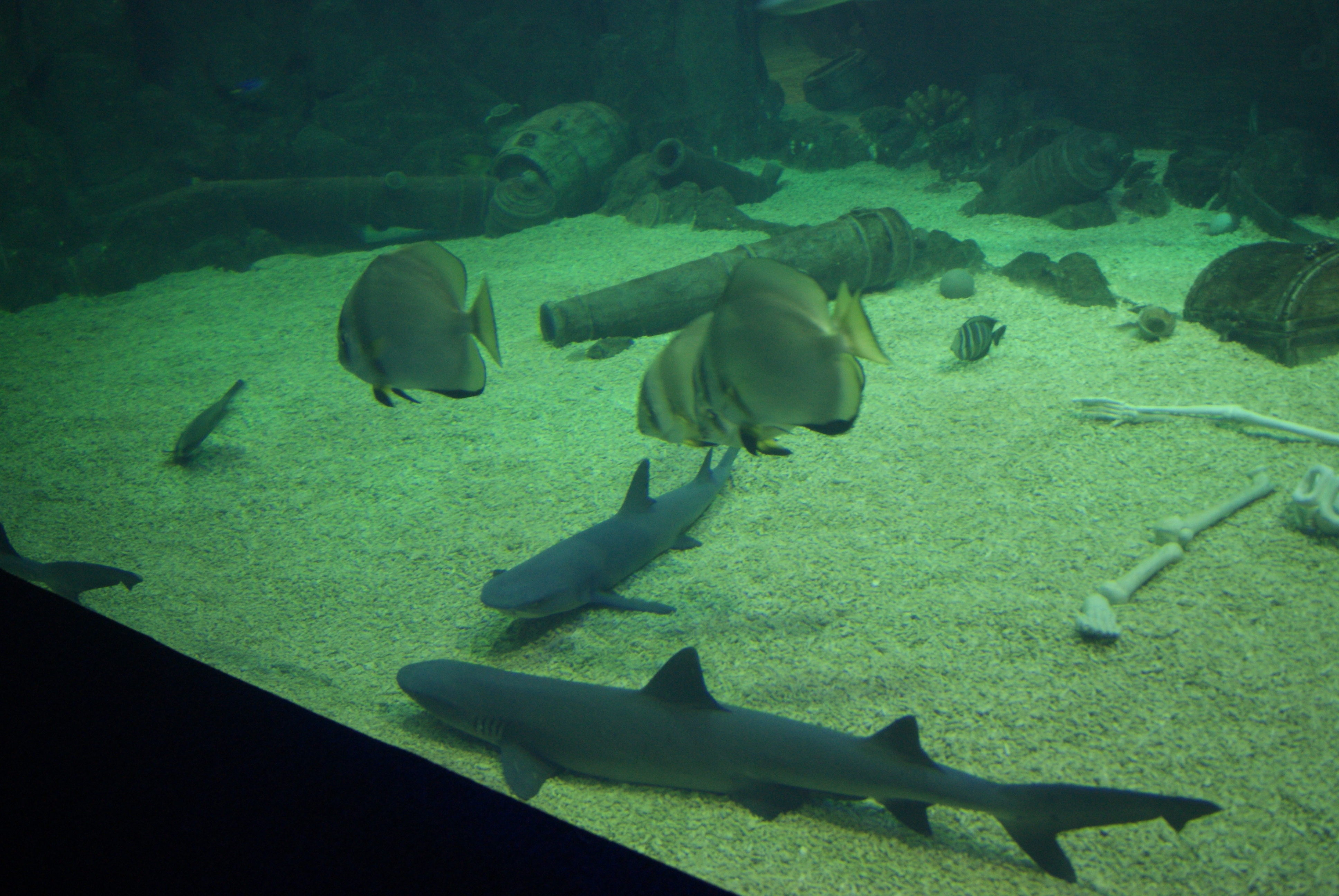 фото океанариума в сочи каждом