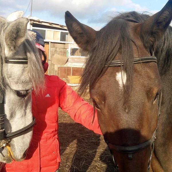 Лошадки)