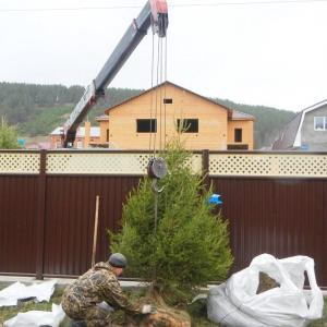 Посадка елочек на участке в Удачном и уборка территории. http://zelenaya-sibir.ru