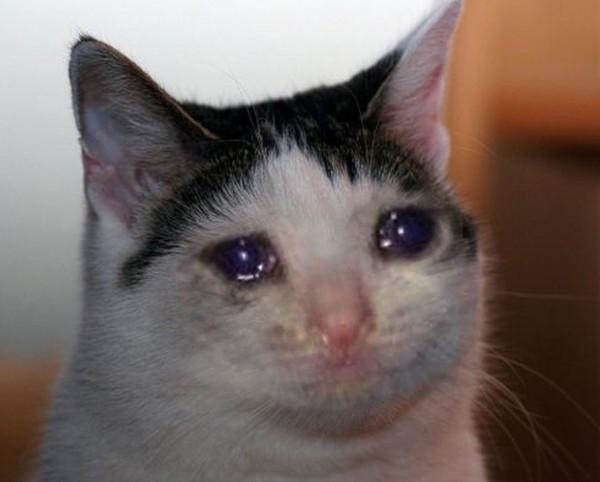 Картинки плачущего котика