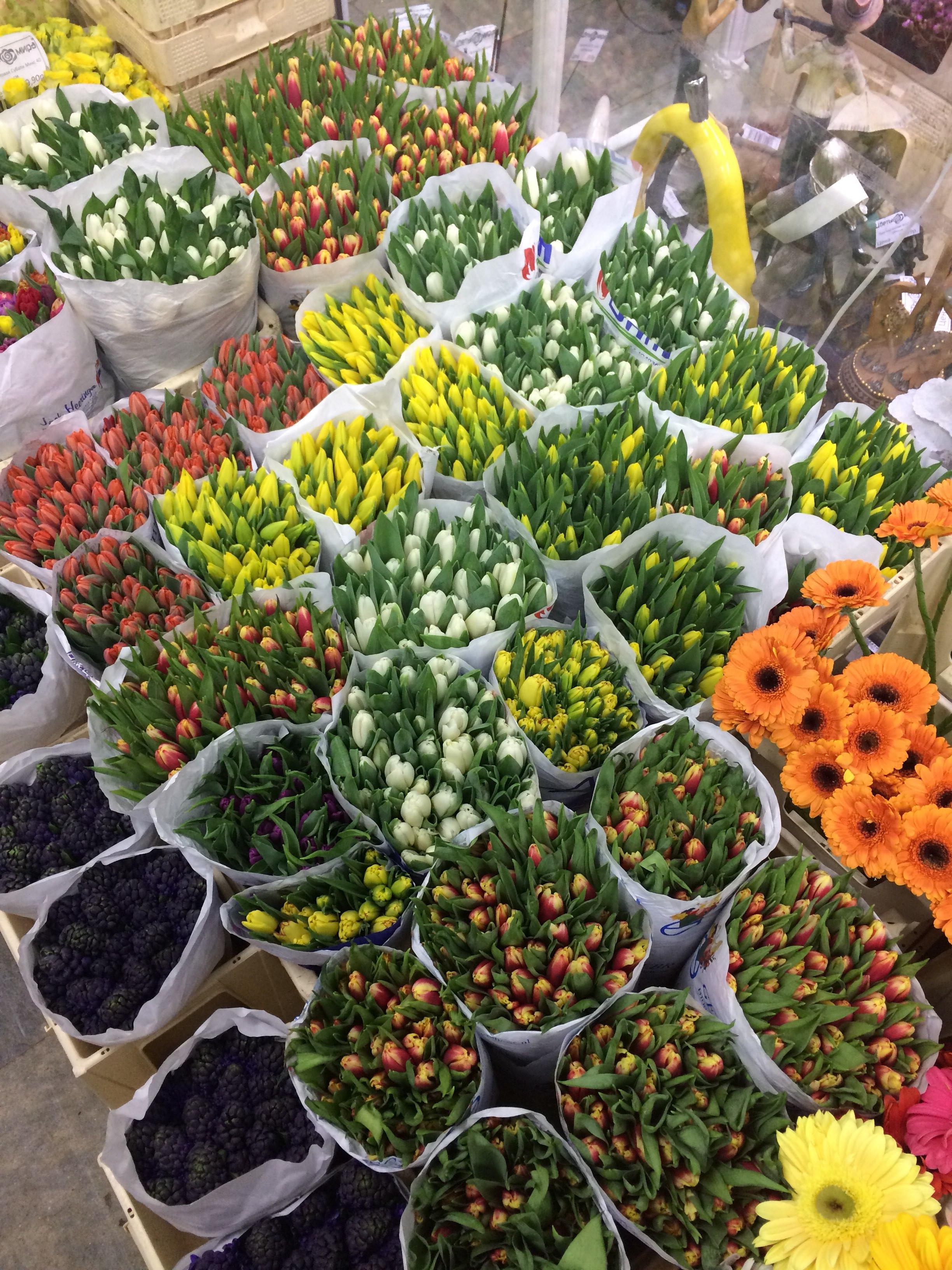 Цветы оптовые базы москва, гортензия