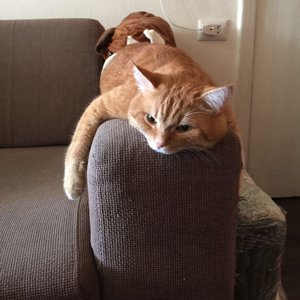 redcat-art