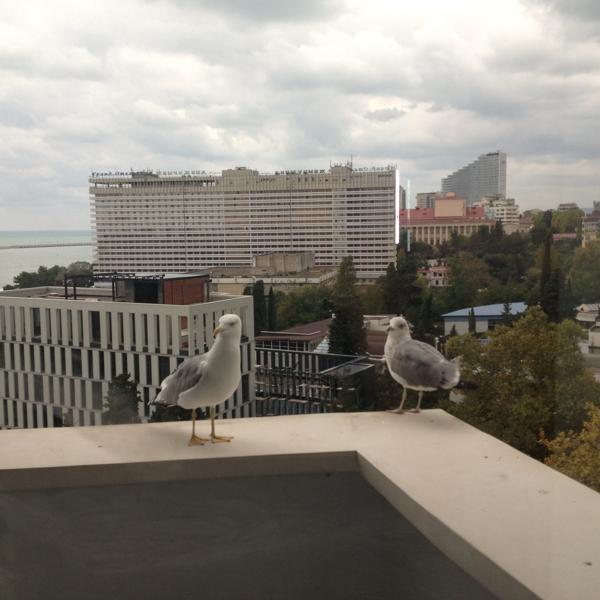Чайки на моем балконе