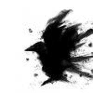 raven17