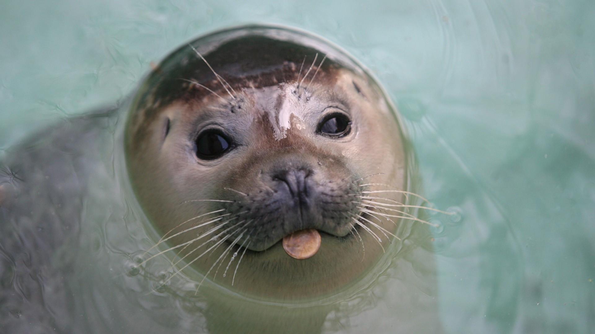 Морской котик фото прикольные