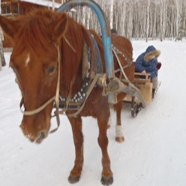 катание на лошадях 100 рублей пол часа))) дети были в восторге