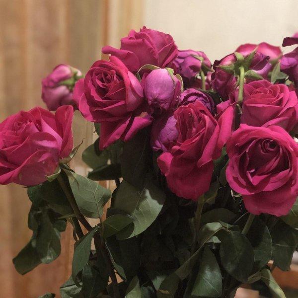 машину поздравление от донны розы бренд может