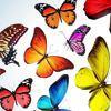 Контактная выставка живых тропических бабочек