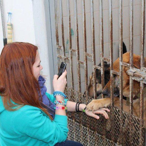музыкальная нация приюты для животных в краснодаре с фото съемного пушистого воротника