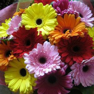 Спасибо за прекрасный букет!!! Цветы оказались очень свежими, красивыми, доставили вовремя