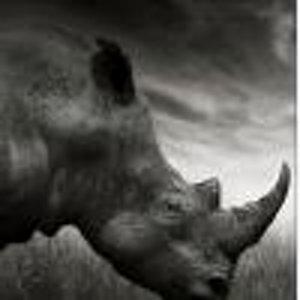 fedorov.rhino