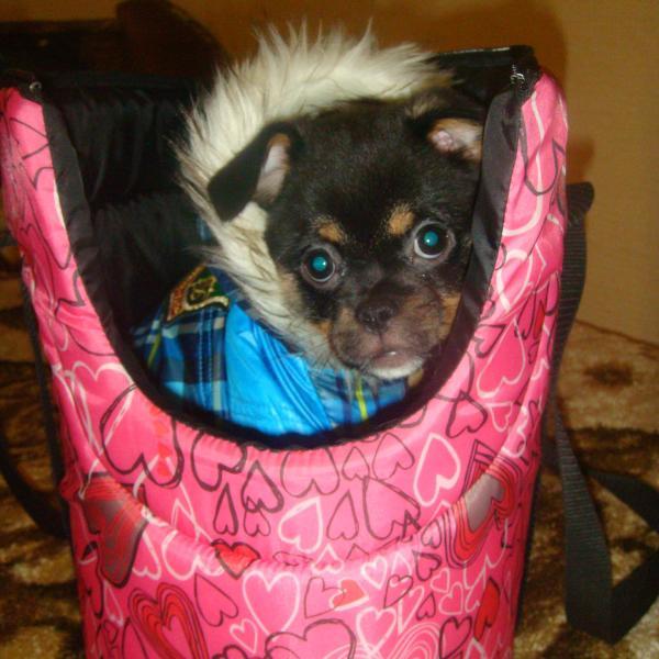Вот так он сидит в сумке и ждёт когда пойдём гулять