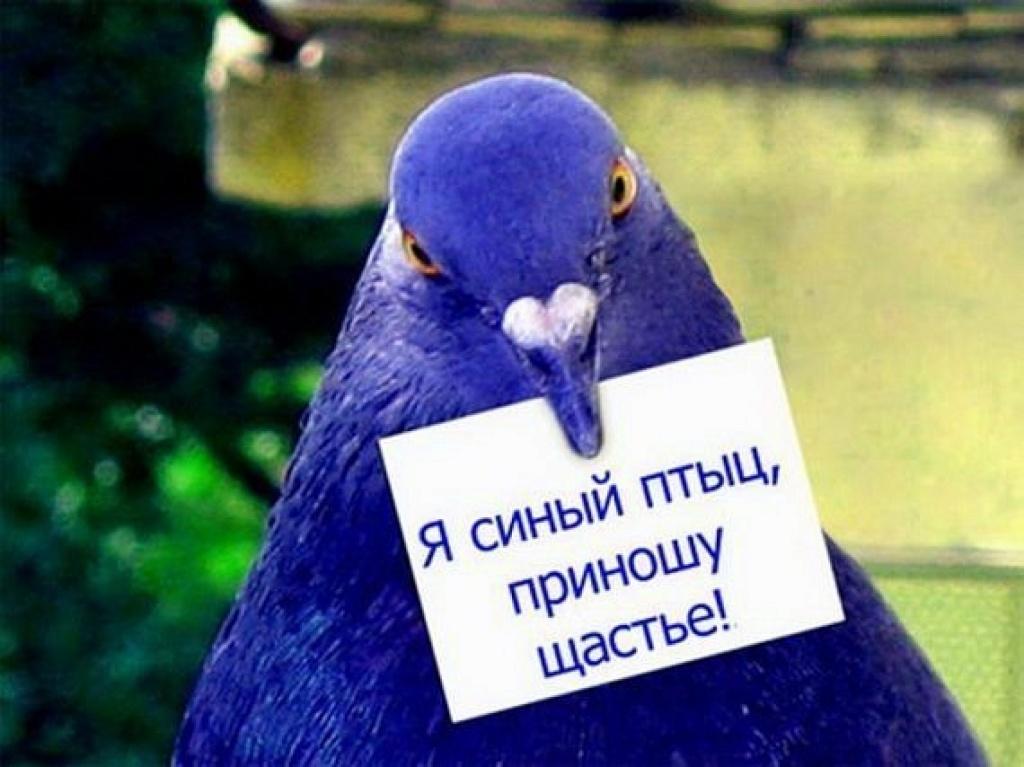 Астрами день, открытка я синий птицы