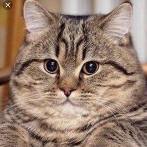 Котик-Мотик