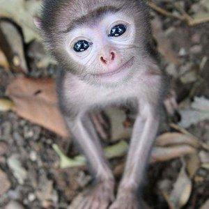 Small monkey