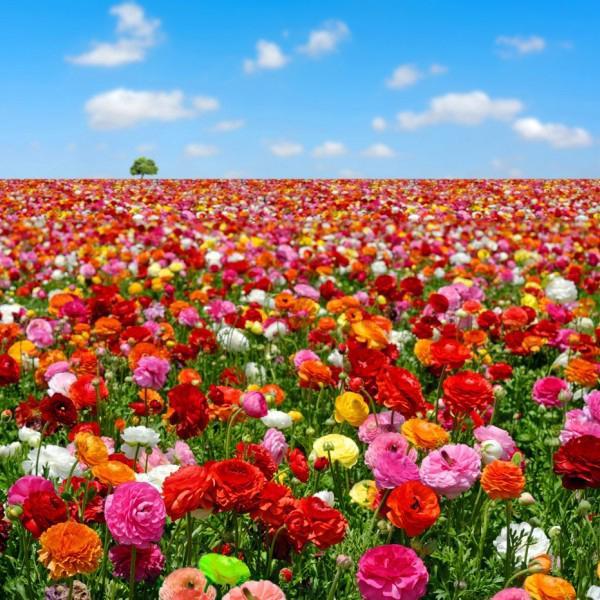 Поле цветов для вас)))
