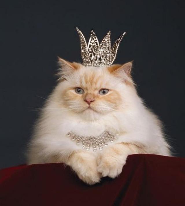 Картинки с короной на голове прикольные картинки, поздравление