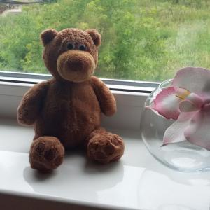 Это частичка нашего нового окна. А на подоконнике Кристалит сидит наш медвиженок!