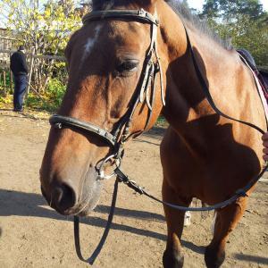 Конь Вова