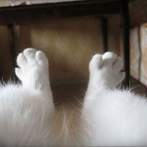Кошка_в_сапожках