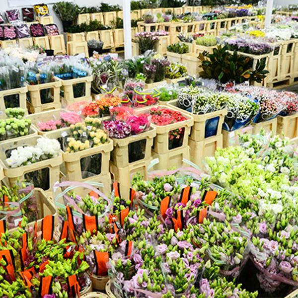 Грин сфера оптовый склад цветов