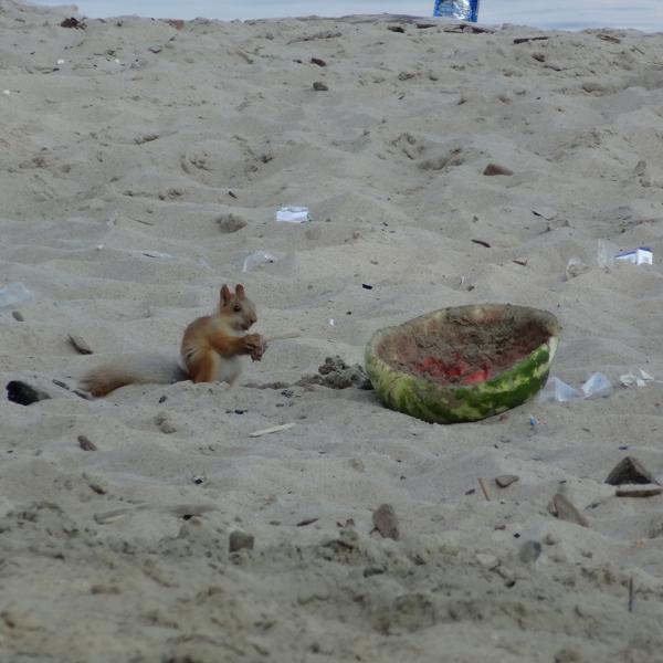 вот такой порядок на пляже(((