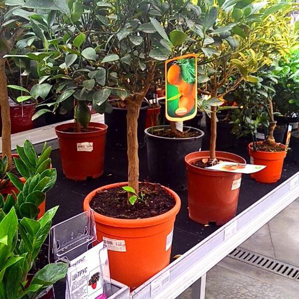 Ставрополь магазин цветов планета лета каталог, заказ ромашек