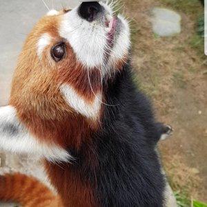 PandaPo 🐼
