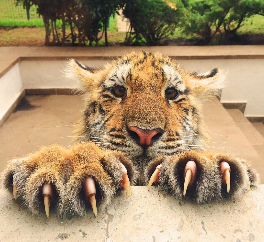 Веселые, тигренок прикольные картинки