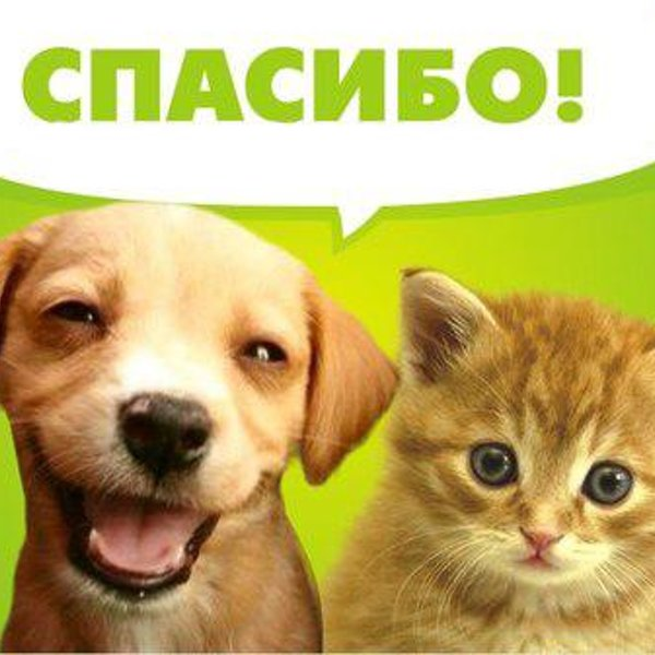 Собака говорит спасибо картинки