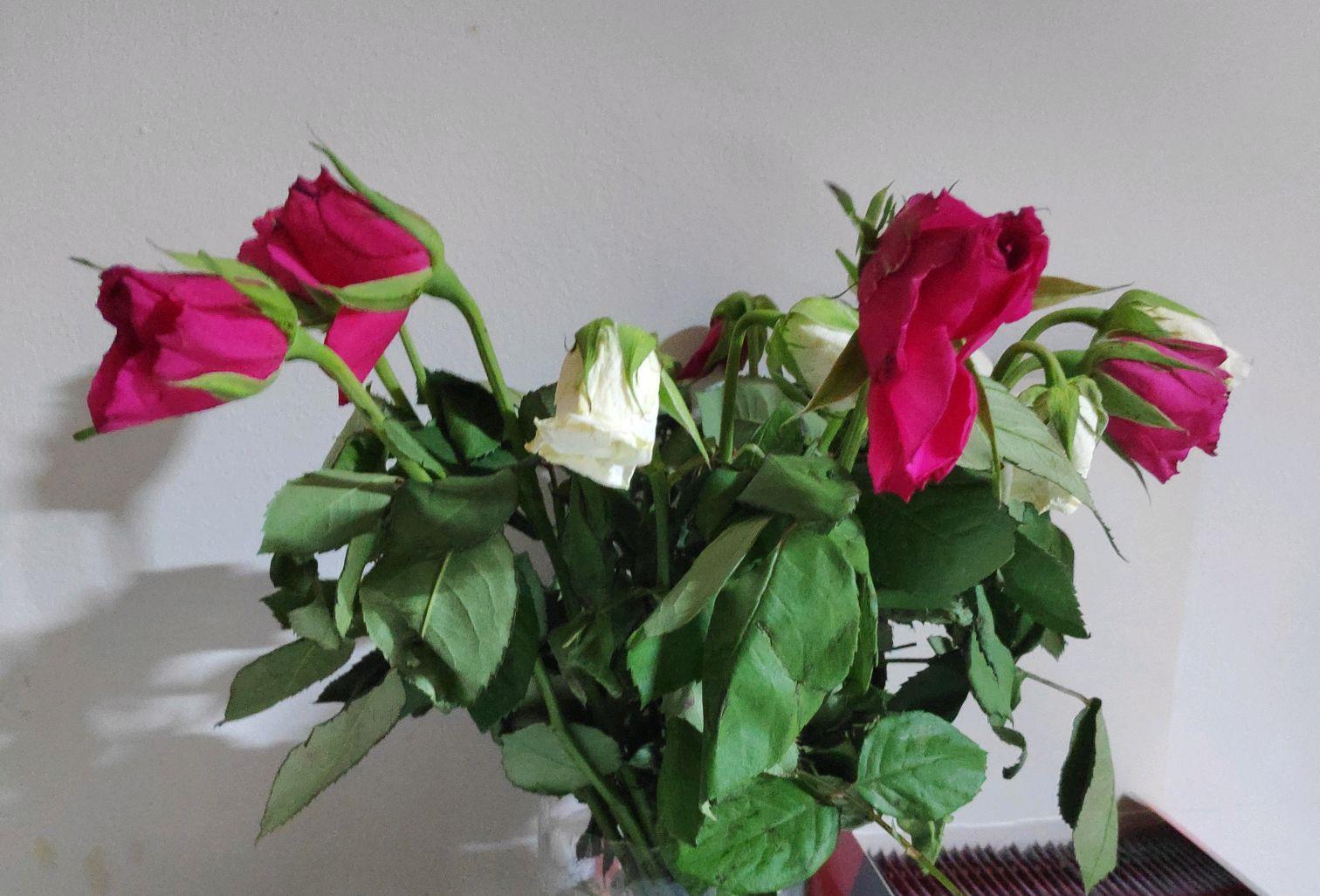 Экзотические, росцветторг кемерово цены на цветы