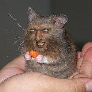 Голодный Крыс