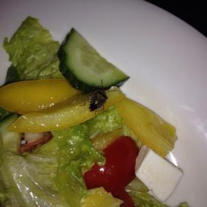 Клоп в салате из Кембоеджа