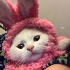 Очень рандомный котик
