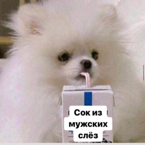 Галчонок Кридова