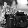 Фотошкола для начинающих Евгения Борковского