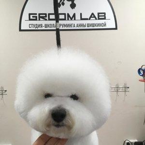 Groom Lab