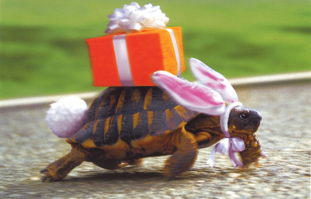Картинка с днем рождения черепаха