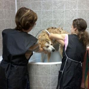 ...решила баба порося помыть...