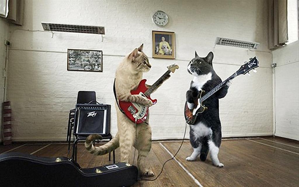 любители картинки юмор про музыку была частью