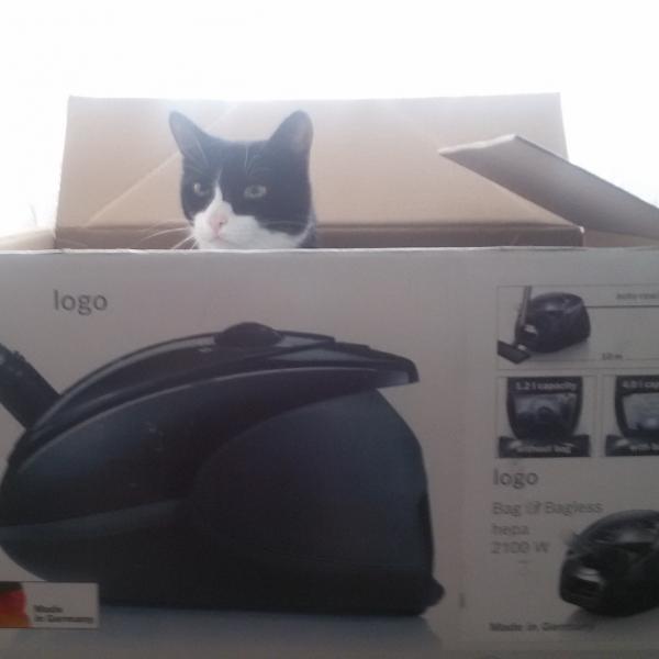 А пустую коробку прочно оккупировали котики))