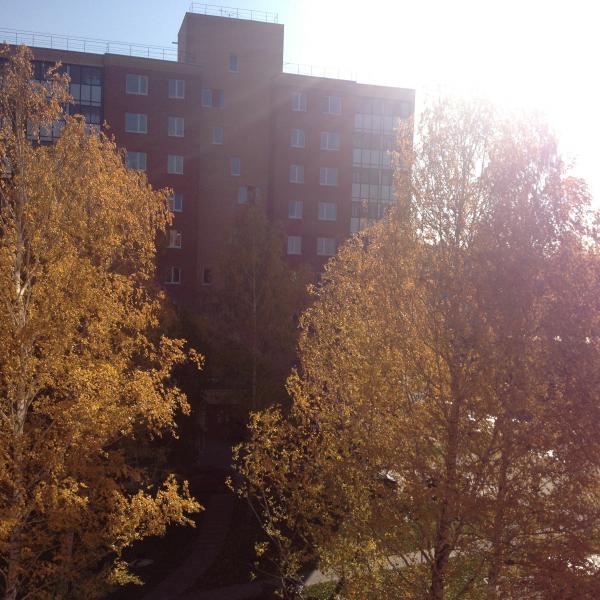 Золотая осень из нашего окна)
