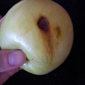 вот такой маленький дефект. и так на всех яблочках.