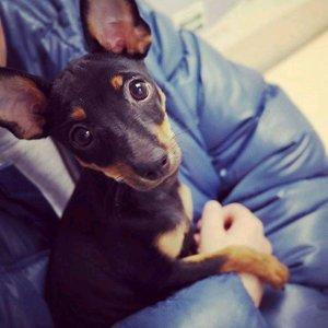 dog_owner