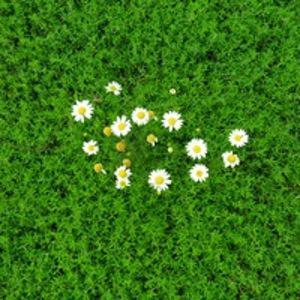 Весна Шарипова