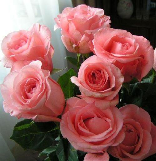 Зайка прости, открытки о счастье любви и цветы