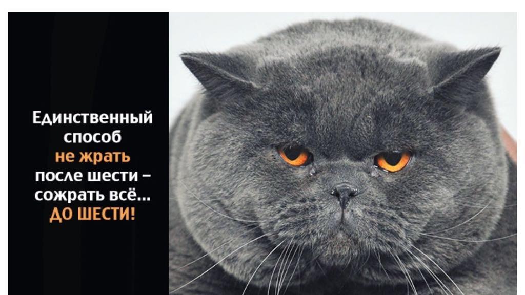 Гифы, картинка с котом и надписью жрешь