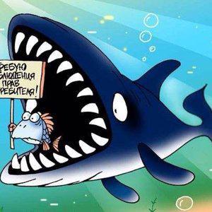 Акула сервиса