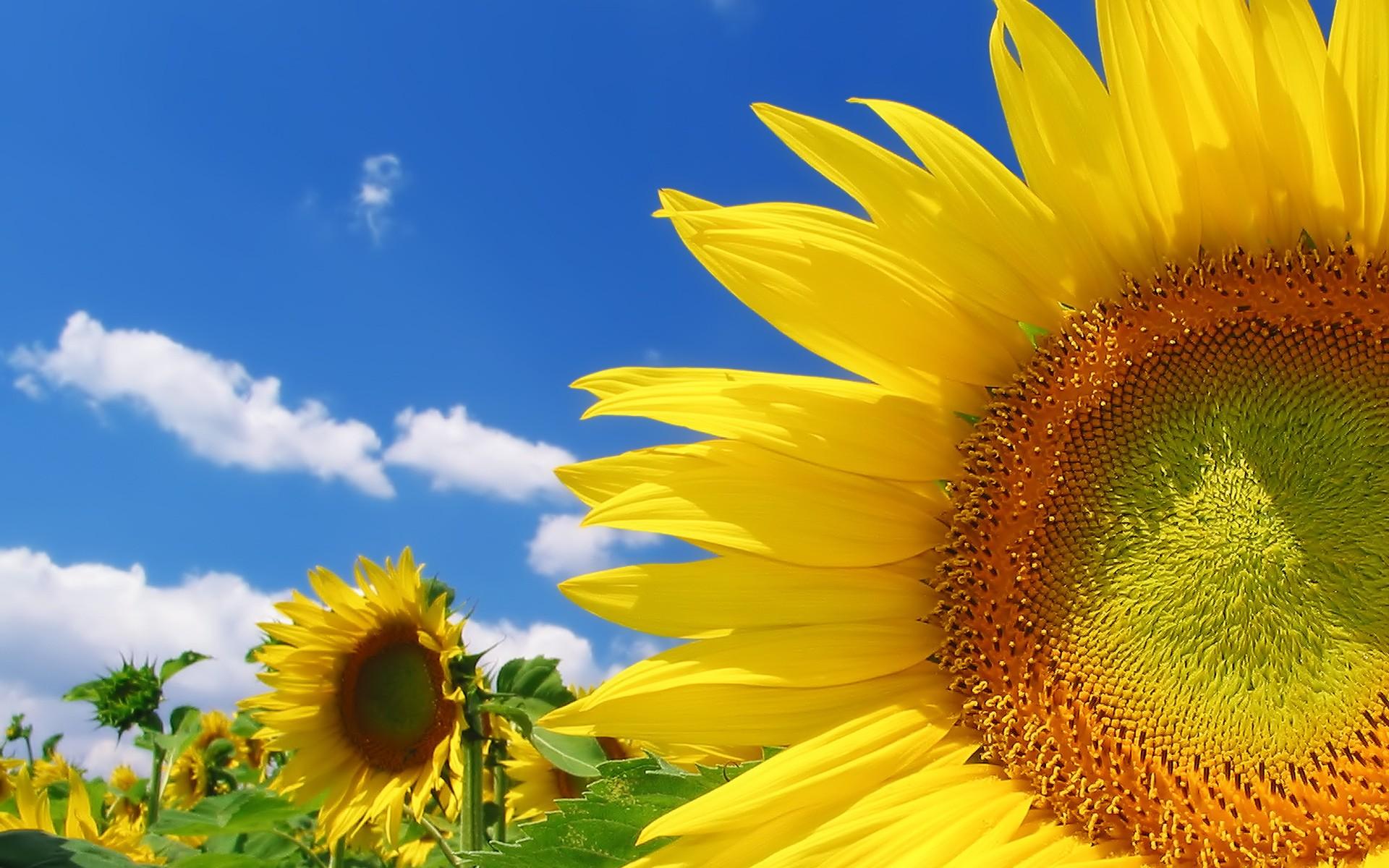солнечного дня живые картинки лучшие стене евгении еще